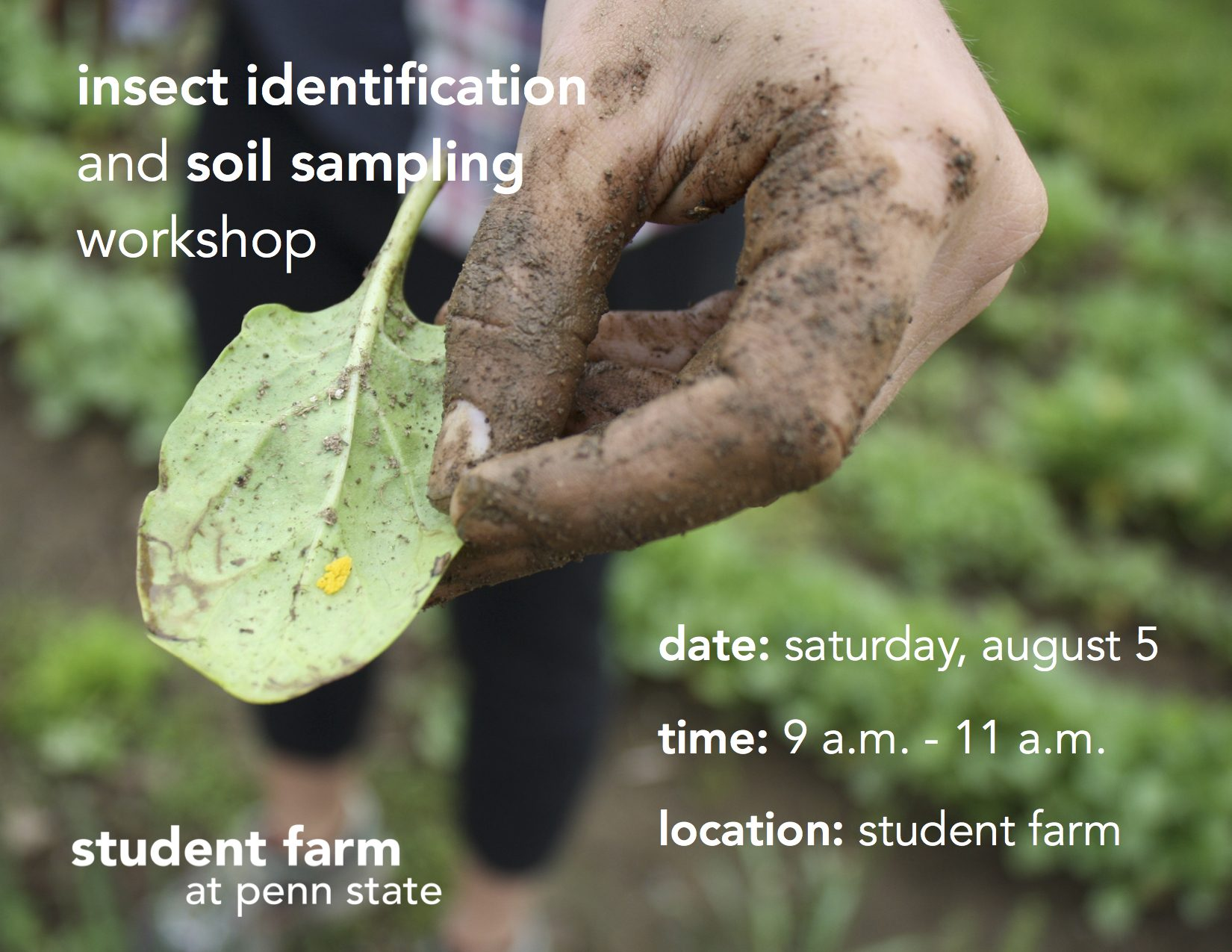 Insect Identification and Soil Sampling workshop