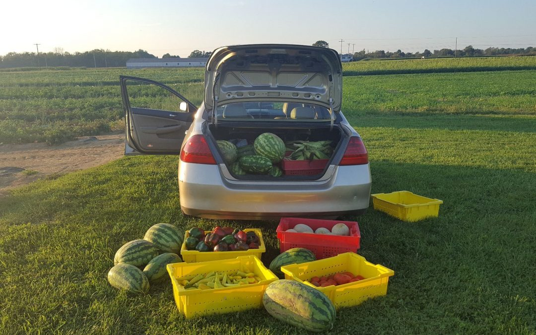 From Food Waste to Food Rescue