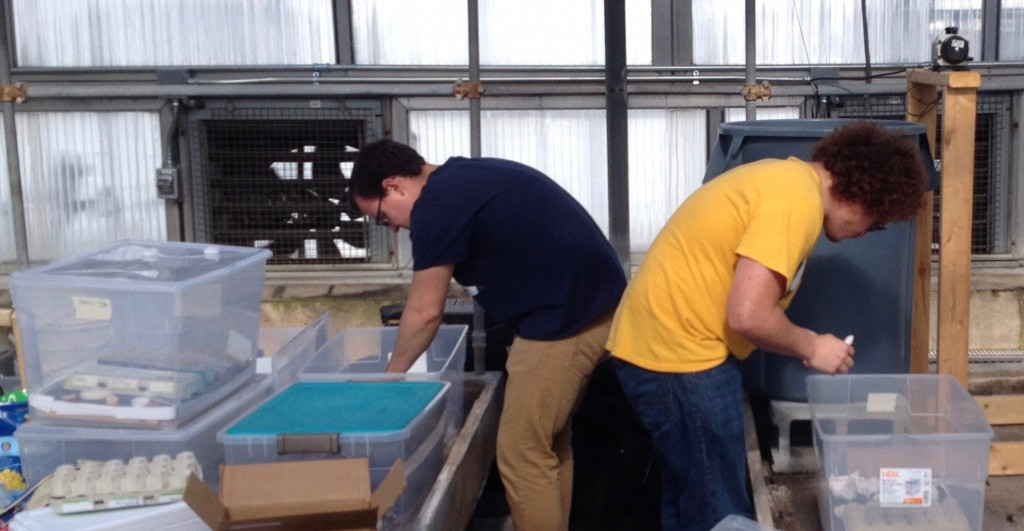 Student Farm Club members Paul and Brandon check out Alex's cricket farming operation in the greenhouses. (Alex Curtze)