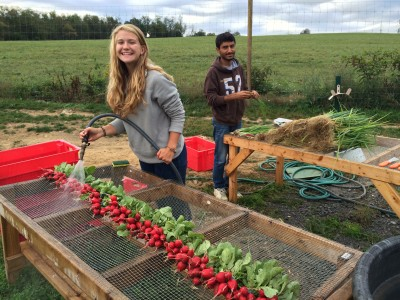Me and fellow intern, Mary, washing freshly harvested crops on the farm (Leslie Pillen)