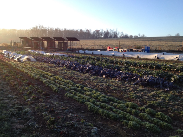 The one-acre farm in the fall (Alex Curtze)