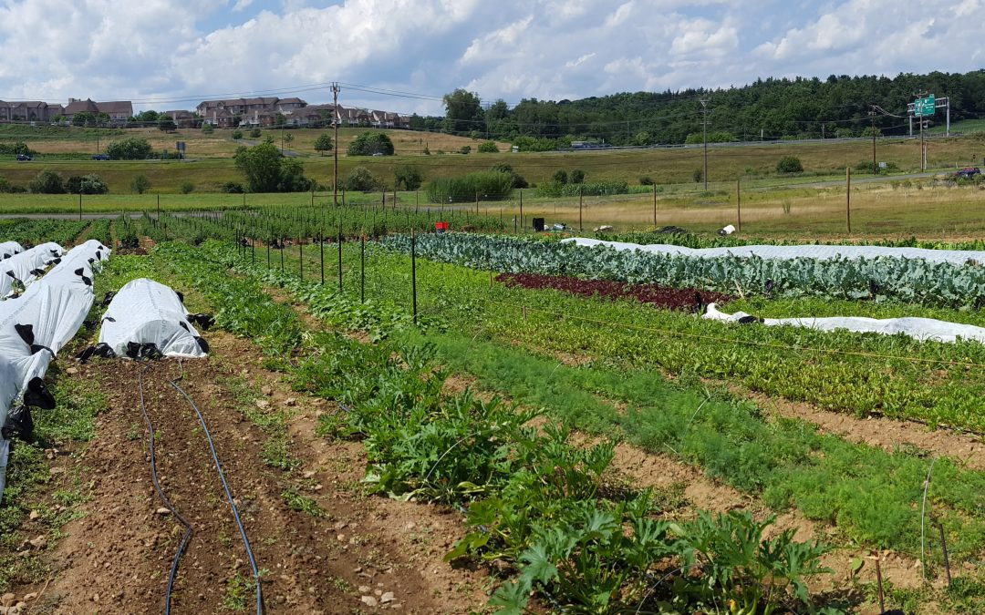 The Student Farm at Penn State Turns One!